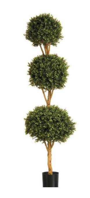 Boxwood Triple Ball Tree 4'