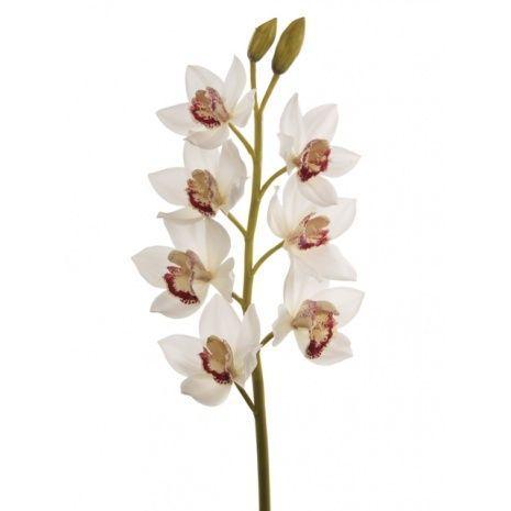 Cymbidium Orchid 85cm White