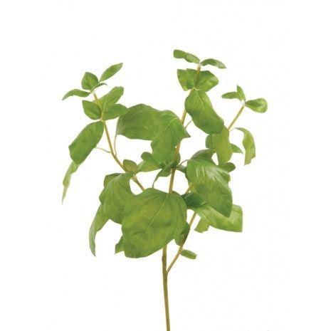 Basil Bunch 39cm Green