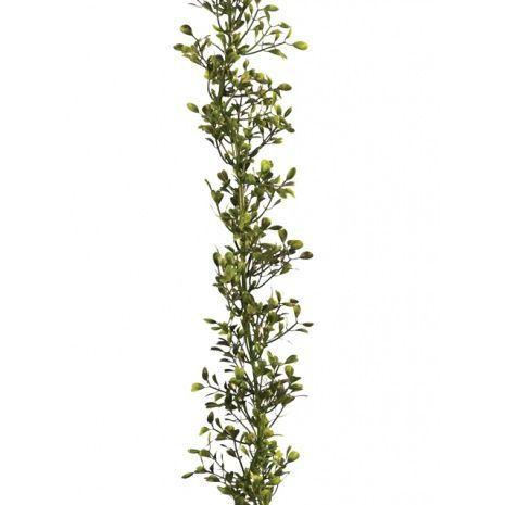 Boxwood Garland 180cm