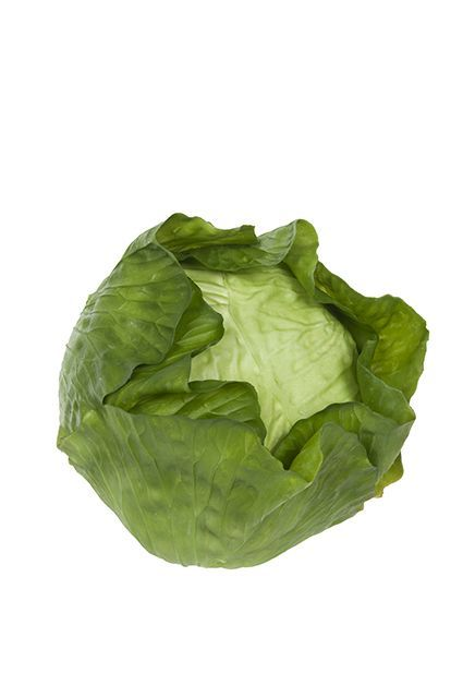 Cabbage Natural Touch