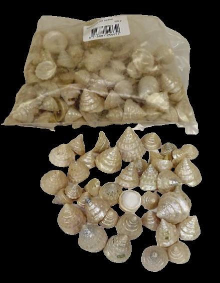 Shells - Tronca Mini Polished x 500g