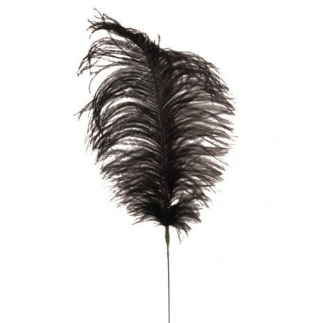 Feather Quill 76cm Black