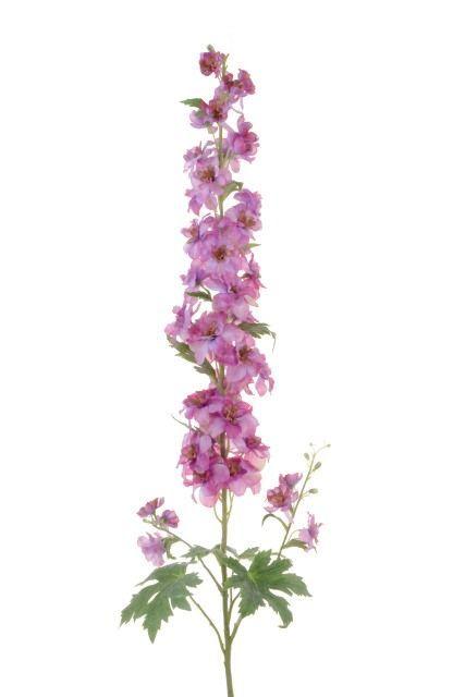 Delphinium 122cm Lavender