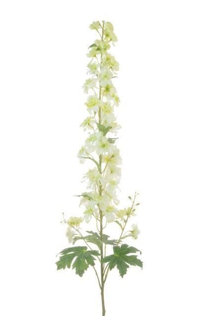 Delphinium 122cm Cream
