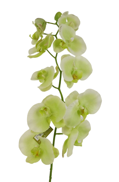 97cm Real Touch Orchid Spray Light Green
