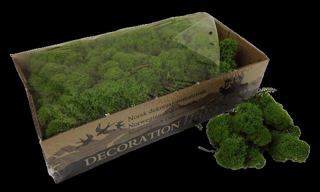 Reindeer Moss (Icelandic Moss) Medium Green