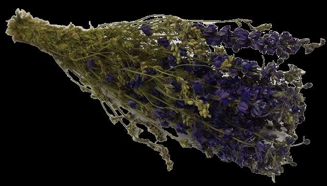Dried Larkspur Dark Blue Bunch