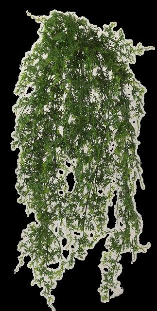 Fern Hanging Bush UV 80cm