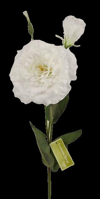80cm Eustoma Spray White
