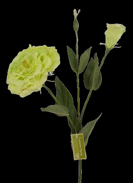 80cm Eustoma Spray Green