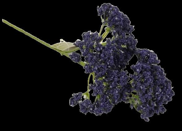 36cm Lace Flower Blue