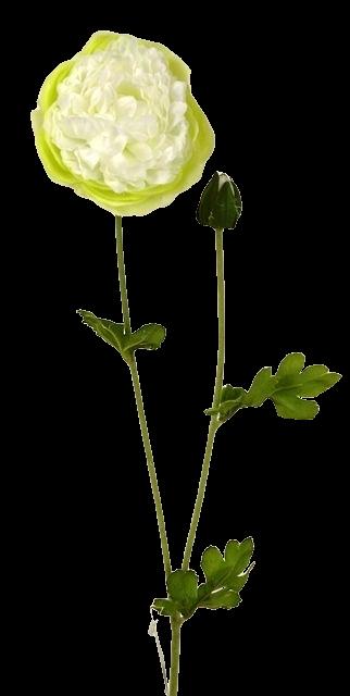 63cm Ranunculus Spray Cream/Green