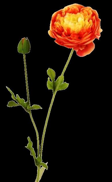 63cm Ranunculus Spray Orange/Cream