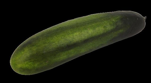 Cucumber Large Green