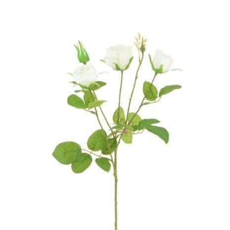 English Cabbage Rose x 4 -61cm Cream