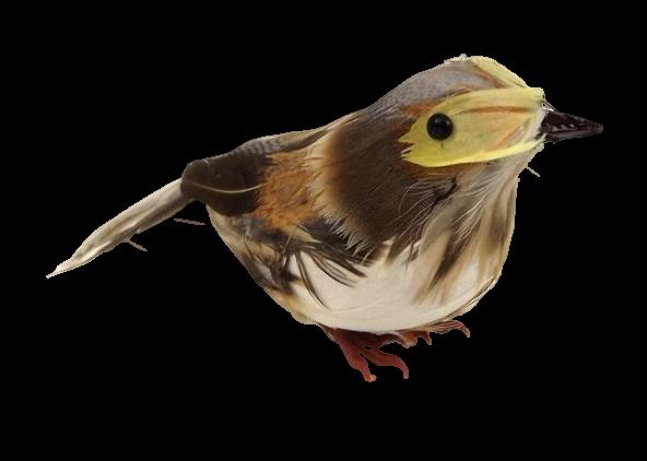Feathered Thrush Natural (13cm) x 6pcs