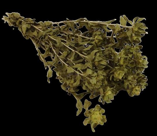 Carthamus Green Bunch