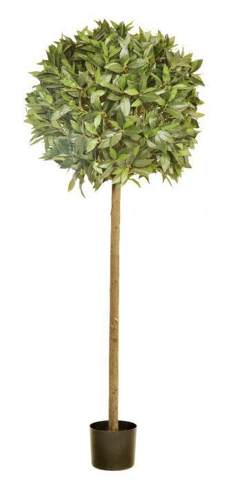160 x 60cm Bay Topiary In Pot (1554 Leaves)
