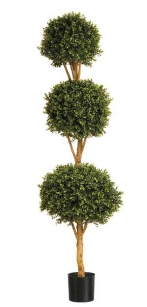 6ft Boxwood Triple Ball Tree