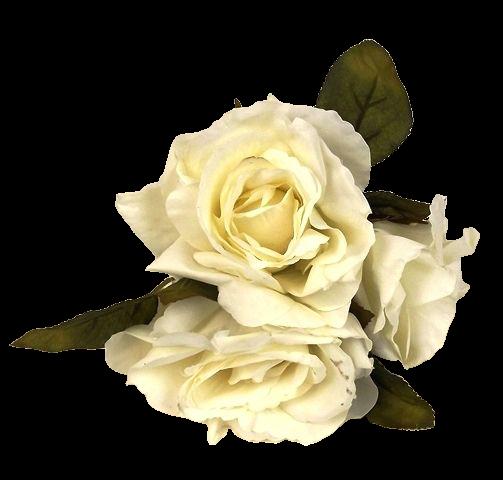 24cm Open Rose Posy x 3 Heads Cream