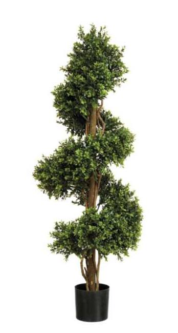 4' Boxwood Spiral Plant W/1,728 Leaves