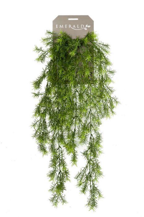 Asparagus Sprengeri Hanging Bush 75cm