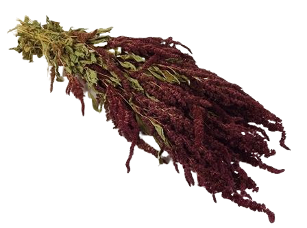 Amaranthus Dried Red Bunch