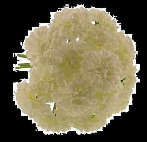 32cm Carnation Bundle Cream