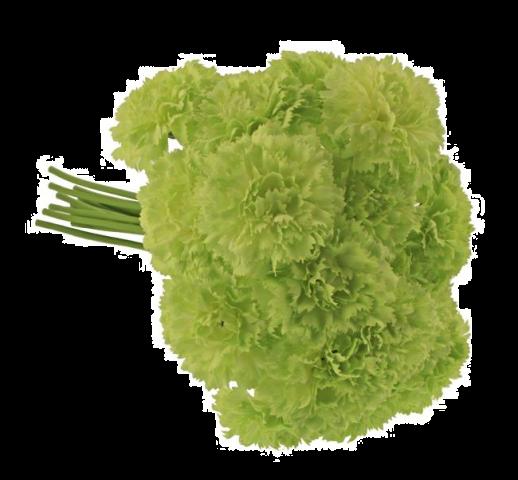 32cm Carnation Bundle Green