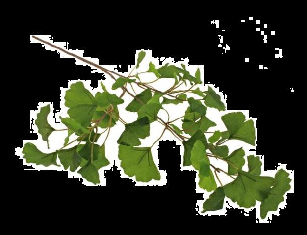 80cm Ginkgo Spray Green
