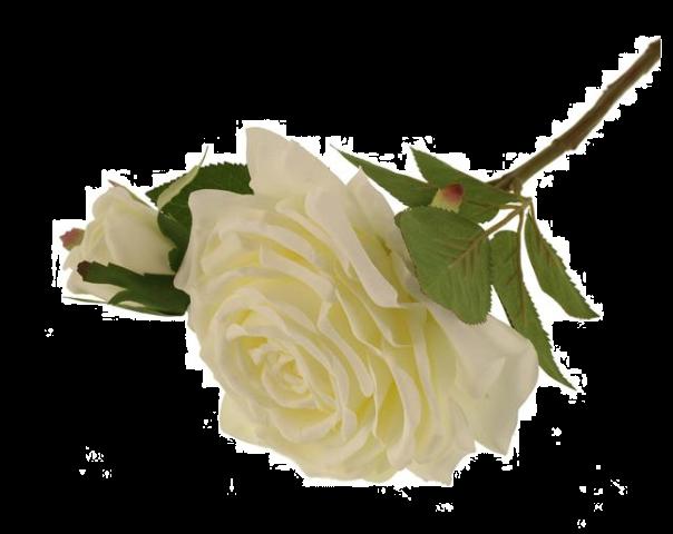 36cm Rosa Eden Pick Cream