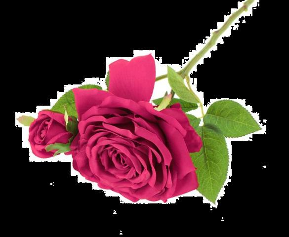 36cm Rosa Eden Pick Pink/Beauty