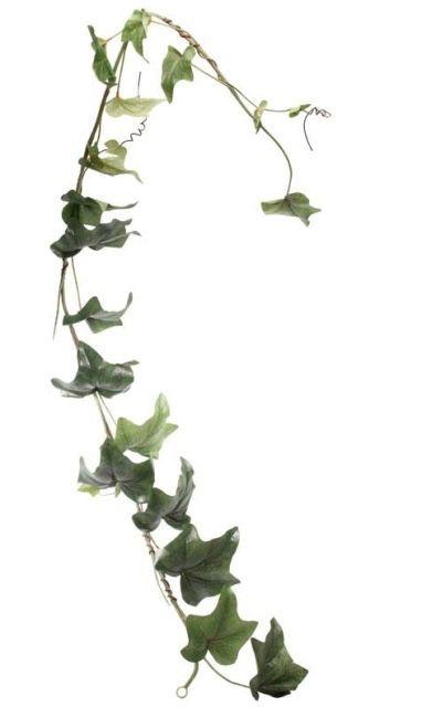6ft English  Ivy Garland x 24 lvs