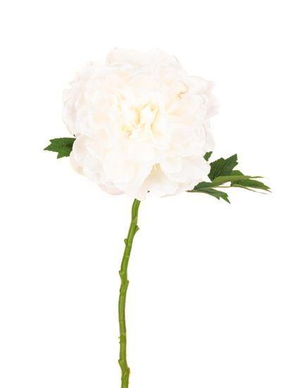 Blush Peony White - 62cm White/Cream