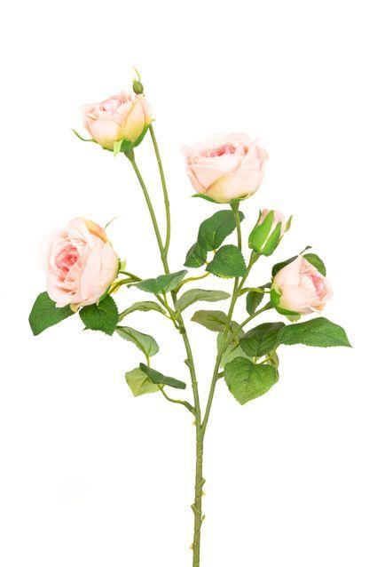 Abeba Rose Spray x5 - 60cm Pink