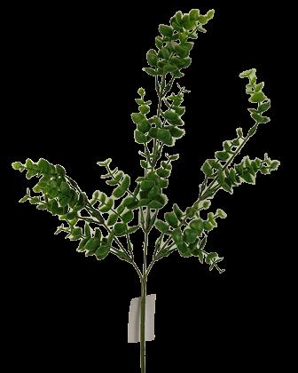 Eucalyptus Leaves Branch