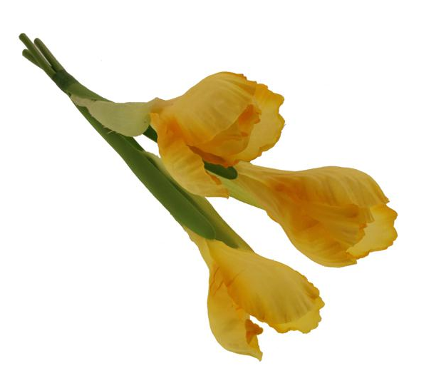 26cm Crocus Bundle Yellow
