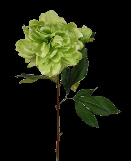 66cm Peony Green