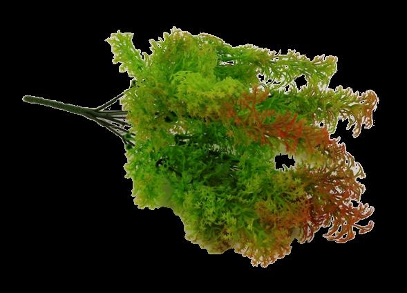Fish Grass Bush 35cm