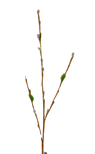 80cm Pussy Willow Stem