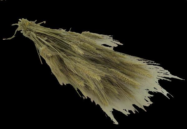 Bearded Wheat Bunch (Dutch)