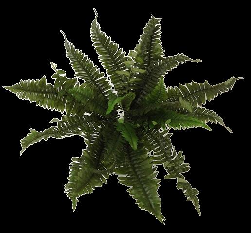 Boston Fern x 24 Leaves 36cm